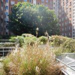 Nature en ville - toiture végétalisée